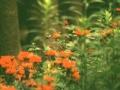 lnt_hummingbirds.jpg