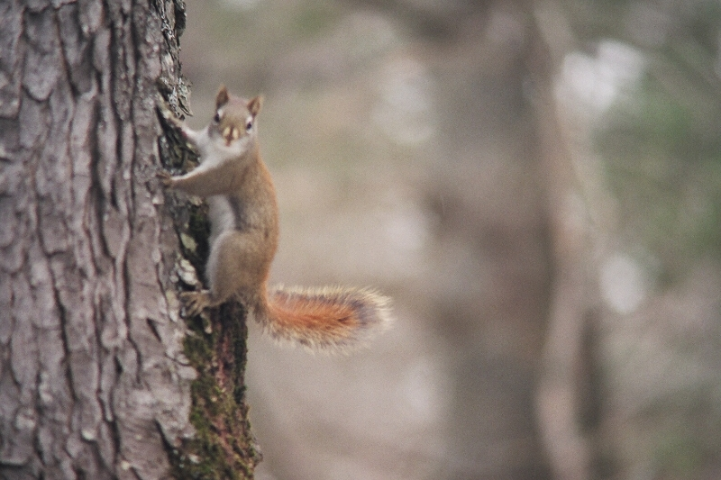 cabin-squirrel.jpg