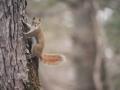 cabin-squirrel.jpg
