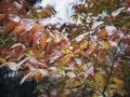 first-sign-of-winter.jpg