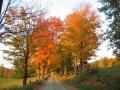 foliage-season.jpg
