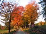 Foliage Season